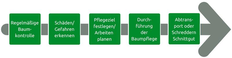 Infografik, die Dienstleistungen aufzeigt, die wir von der Baumpflege Koblenz übernehmen.