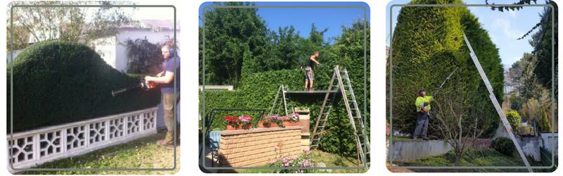Wir schneiden Ihre Hecken und Sträucher und führen die Gartenpflege in Koblenz durch.